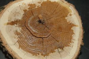 Химическая окраска древесины