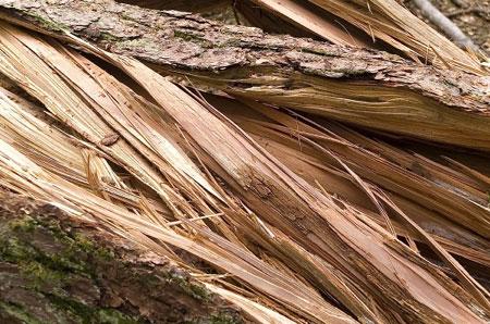 Волокна древесины